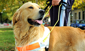 Give a Guide Dog